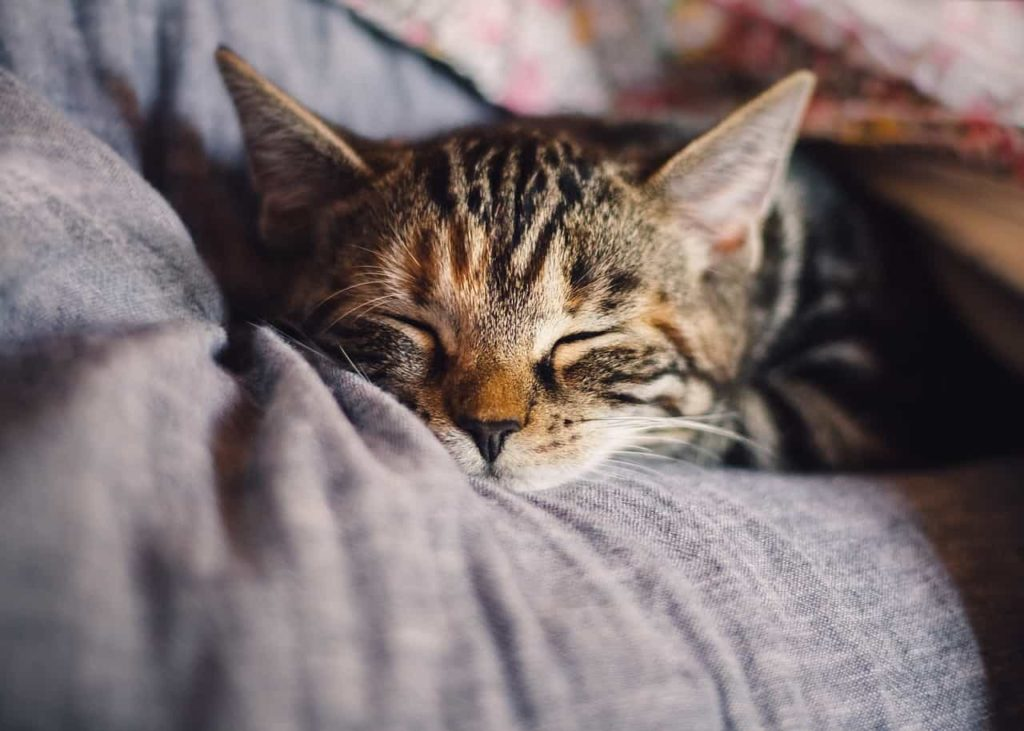 治療法がない?つらすぎる『眠い眠い病』の現実