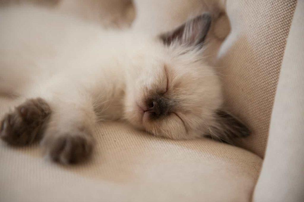 できるだけ質の良い睡眠をとる
