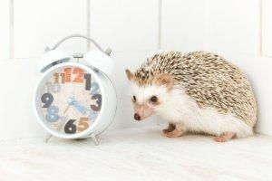 あなたの『本当の時給』はいくらですか?「時間の価値」を意識する大切さ