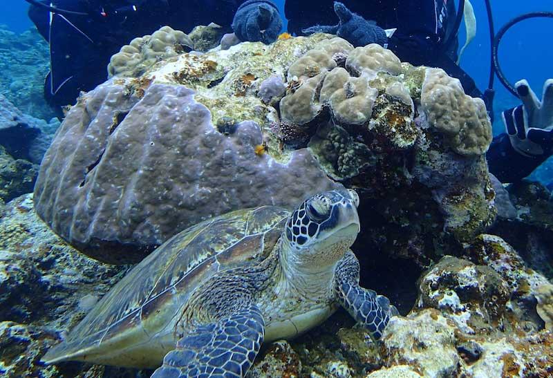 沖縄の海で出会ったウミガメ